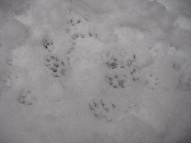 snow-21-01-2006_01jpg